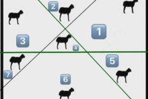 حل لغز يوجد في الحقل سبع خراف